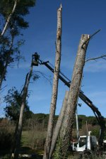 Tala de árboles frente al pabellón de Lliçà d'Amunt