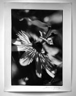 El Fotomercado 2013 de Espai Garum regala una fotografía analógica