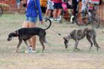 Exposició «Un dia de gossos a les carreres»